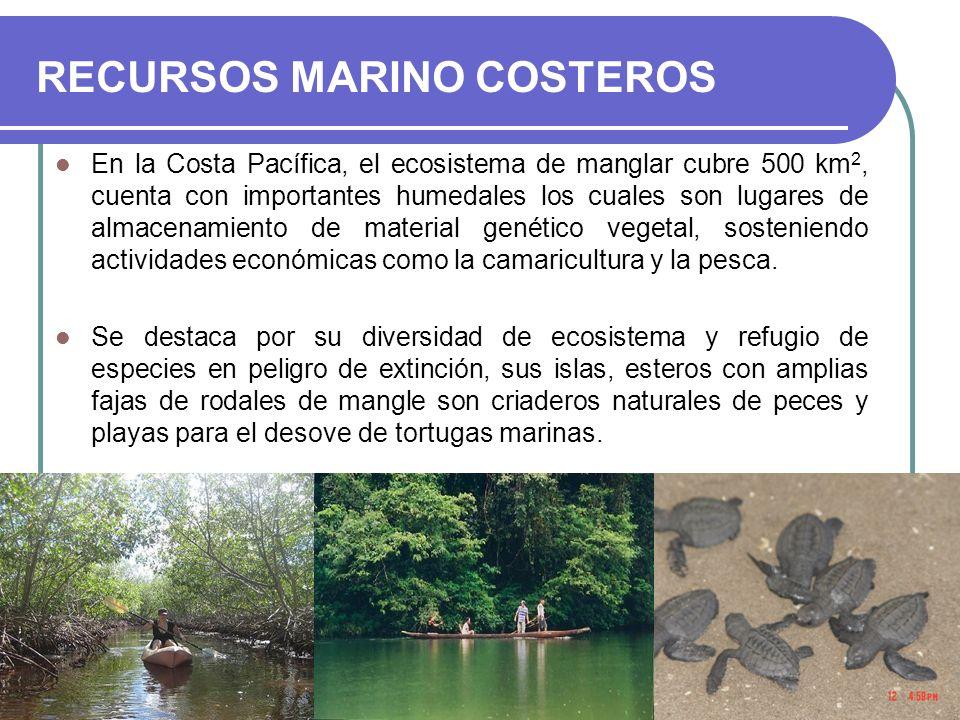 RECURSOS MARINO COSTEROS En la Costa Pacífica, el ecosistema de manglar cubre 500 km 2, cuenta con importantes humedales los cuales son lugares de alm