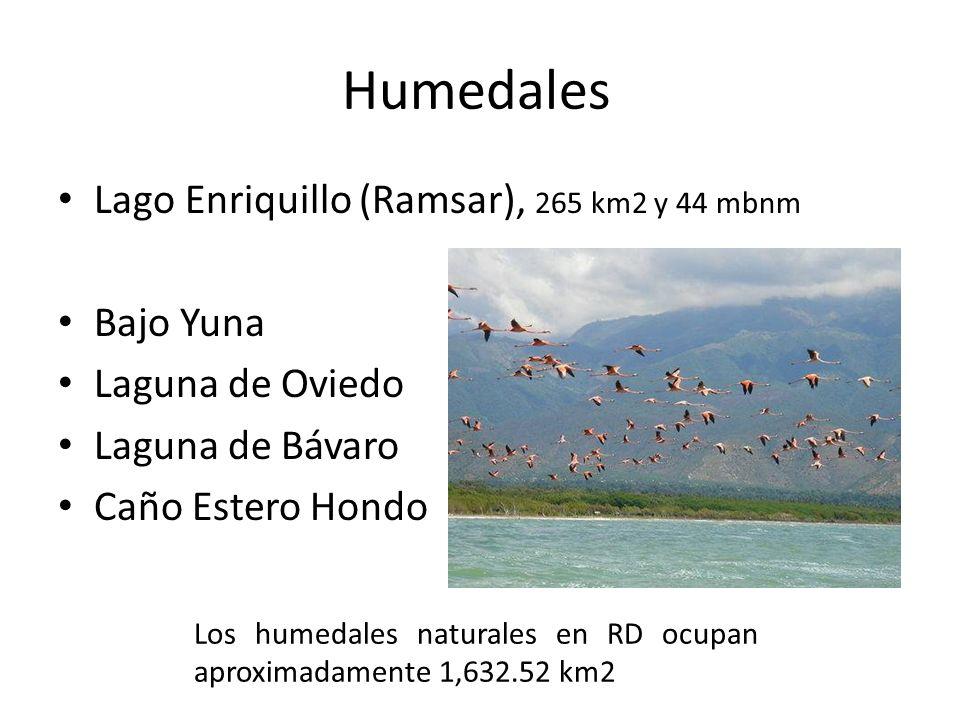 Humedales Lago Enriquillo (Ramsar), 265 km2 y 44 mbnm Bajo Yuna Laguna de Oviedo Laguna de Bávaro Caño Estero Hondo Los humedales naturales en RD ocup