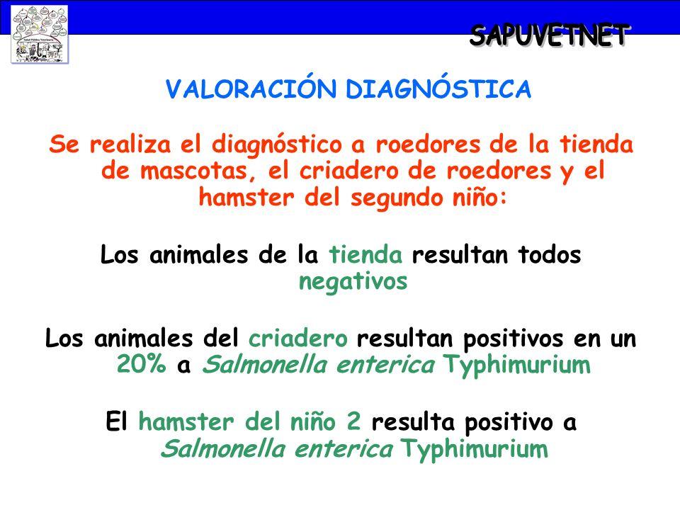 VALORACIÓN DIAGNÓSTICA Se realiza el diagnóstico a roedores de la tienda de mascotas, el criadero de roedores y el hamster del segundo niño: Los anima