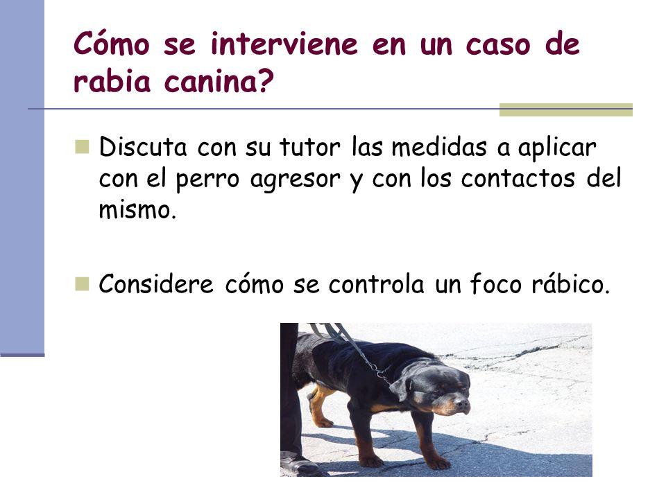 Cómo se interviene en un caso de rabia canina? Discuta con su tutor las medidas a aplicar con el perro agresor y con los contactos del mismo. Consider