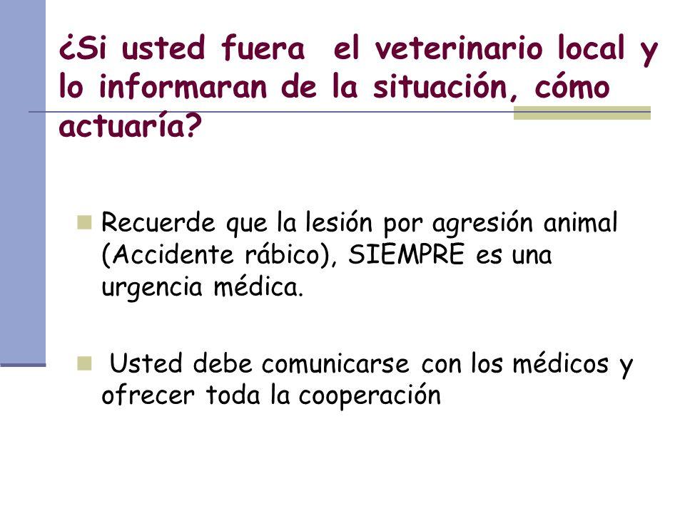 ¿Si usted fuera el veterinario local y lo informaran de la situación, cómo actuaría? Recuerde que la lesión por agresión animal (Accidente rábico), SI