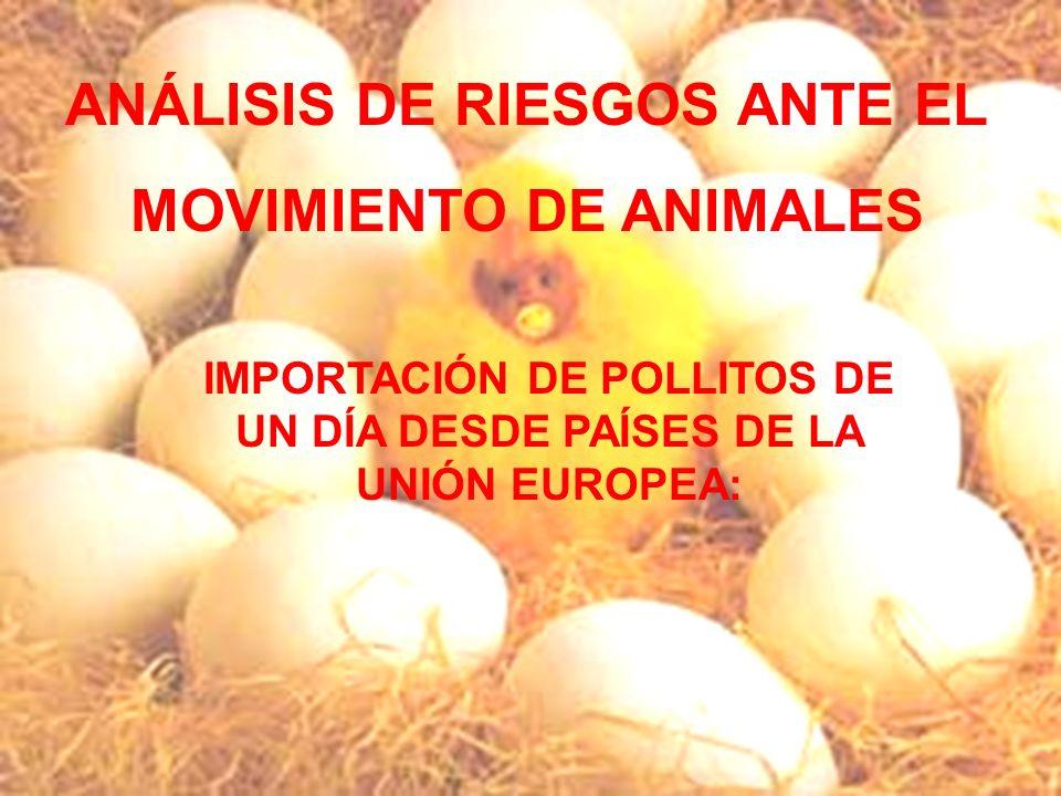 El Lince Ibérico Beatriz Catalán Catalán IMPORTACIÓN DE POLLITOS DE UN DÍA DESDE PAÍSES DE LA UNIÓN EUROPEA: ANÁLISIS DE RIESGOS ANTE EL MOVIMIENTO DE