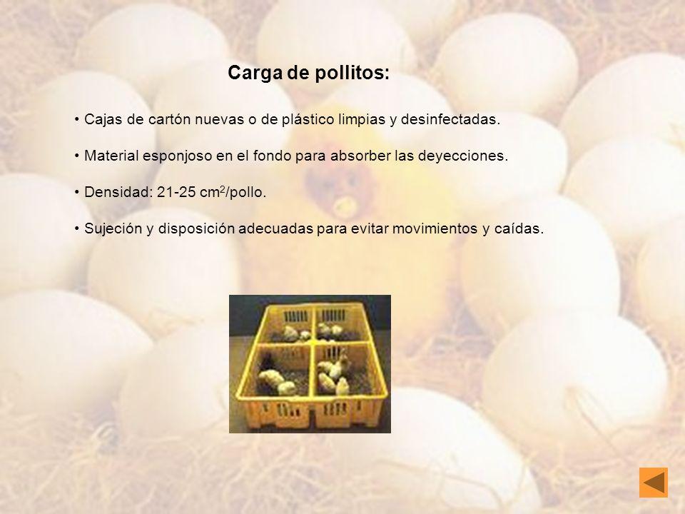 Condiciones ambientales: Temperatura de 31-33ºC dentro de la caja.