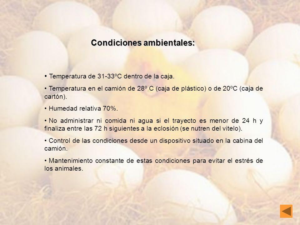 Condiciones ambientales: Temperatura de 31-33ºC dentro de la caja. Temperatura en el camión de 28º C (caja de plástico) o de 20ºC (caja de cartón). Hu