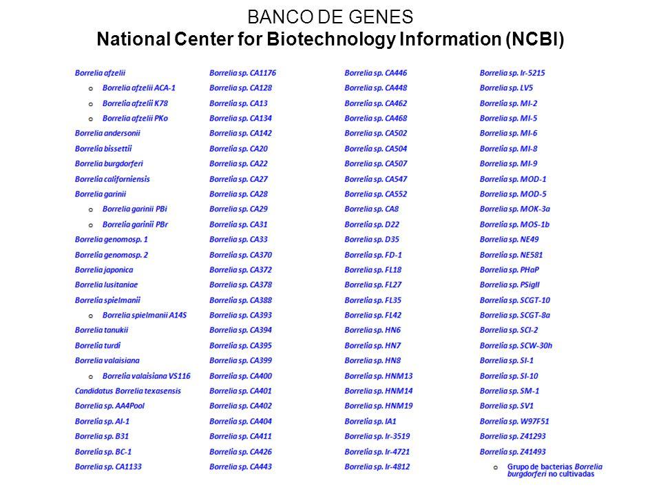 1.Tamaño de muestra: n = tamaño de muestra, resultando 384 por cada grupo de estudio.