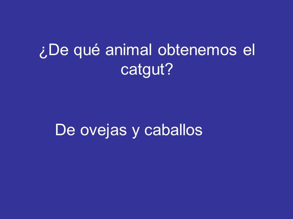 ¿De qué animal obtenemos el catgut? De ovejas y caballos
