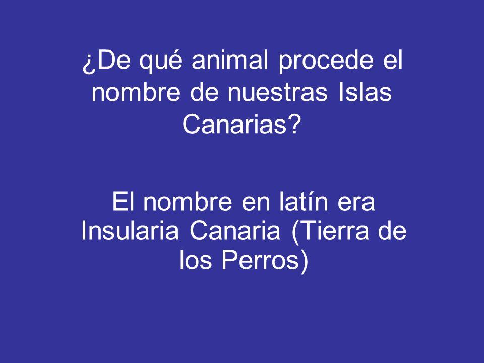 ¿De qué animal procede el nombre de nuestras Islas Canarias? El nombre en latín era Insularia Canaria (Tierra de los Perros)