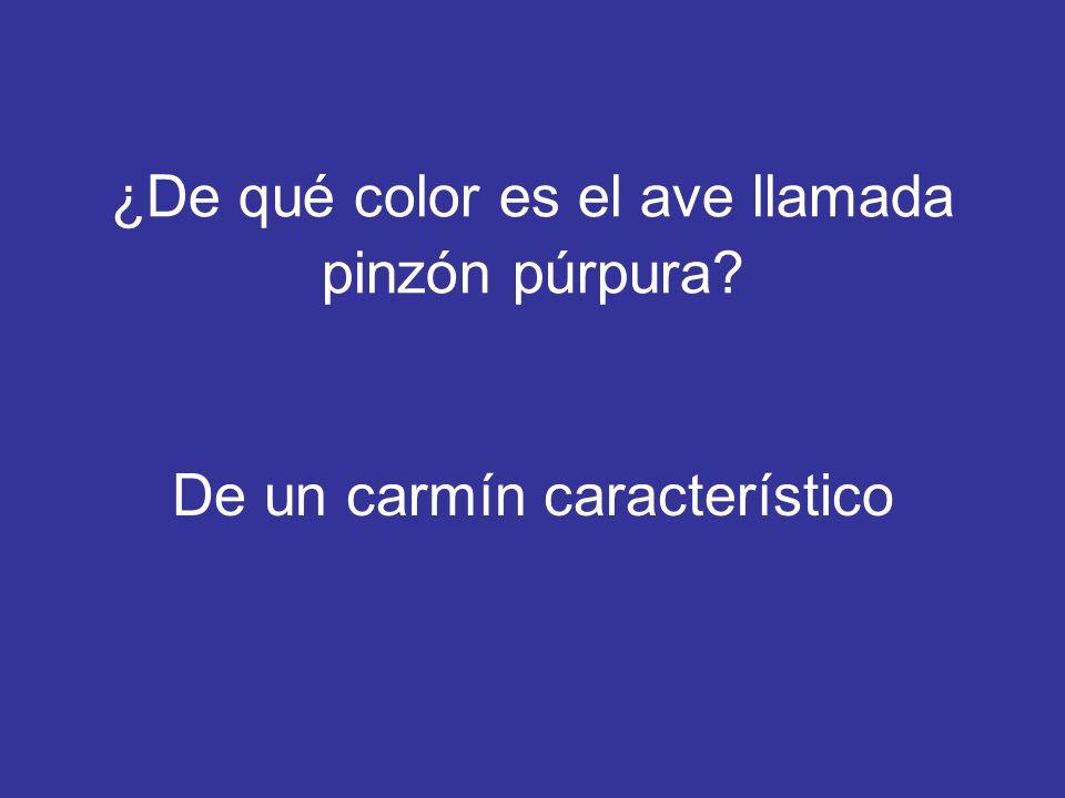 ¿De qué color es el ave llamada pinzón púrpura? De un carmín característico