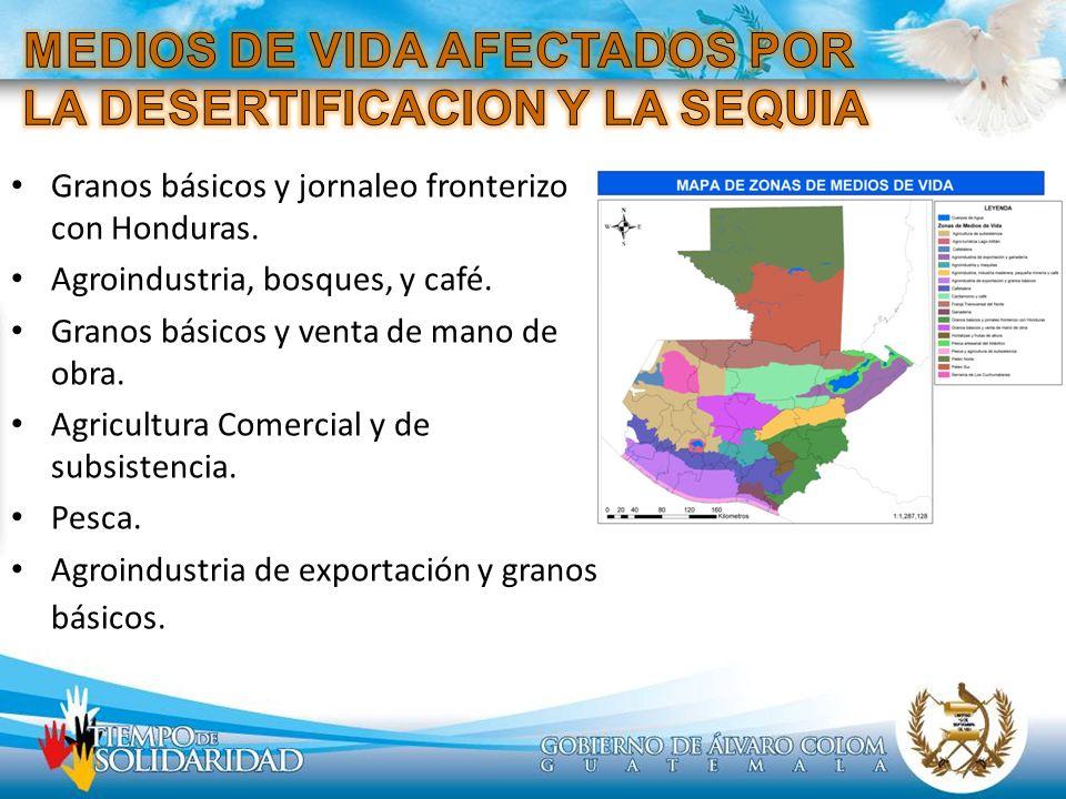 Granos básicos y jornaleo fronterizo con Honduras. Agroindustria, bosques, y café. Granos básicos y venta de mano de obra. Agricultura Comercial y de