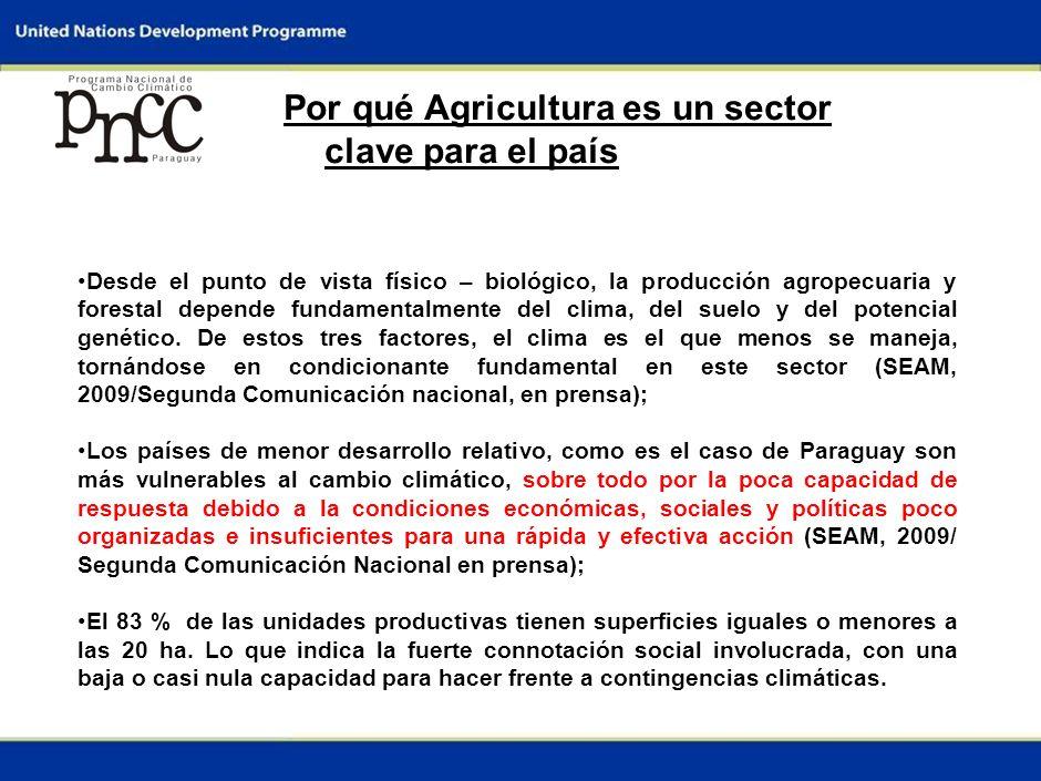 1 Por qué Agricultura es un sector clave para el país La contribución del sector agrícola y ganadero a la economía paraguaya es la más agropecuaria de Sudamérica; aproximadamente un tercio del PIB proviene del sector agropecuario y un quinto del sector agrícola; Absorbe aproximadamente un tercio de la mano de obra ocupada en Paraguay (DGEEC, 1993-1999); Contribuye con el 65% de las exportaciones registradas de bienes (BCP, 1999) (SEAM, 2009/Segunda Comunicación Nacional, en prensa); A diferencia de los tres años anteriores al 2007, En 2007 el crecimiento del PIB está impulsado por un incremento sin precedentes del sector agrícola.