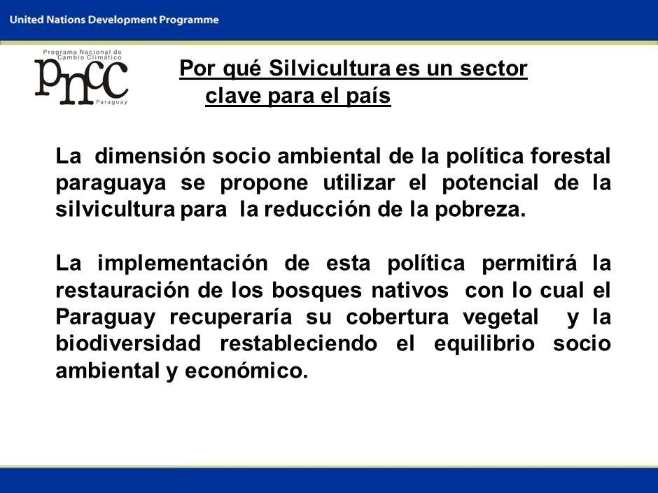 3 Por qué Silvicultura es un sector clave para el país La dimensión socio ambiental de la política forestal paraguaya se propone utilizar el potencial de la silvicultura para la reducción de la pobreza.
