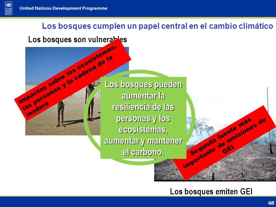 67 USO DE LA TIERRA, CAMBIO EN EL USO DE LA TIERRA Y SILVICULTURA Pia Zevallos, Libélula, Perú