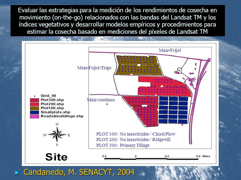 Candanedo, M. SENACYT, 2004 Candanedo, M. SENACYT, 2004 Maíz contínuo Maíz-Fríjol-Trigo Maíz-Fríjol PLOT 100: No insecticides / Chisel Plow PLOT 200: