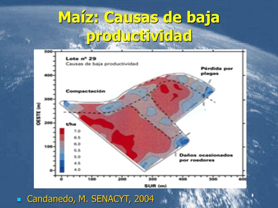 Maíz: Causas de baja productividad Candanedo, M. SENACYT, 2004 Candanedo, M. SENACYT, 2004