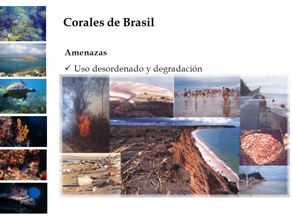 Amenazas Uso desordenado y degradación Corales de Brasil