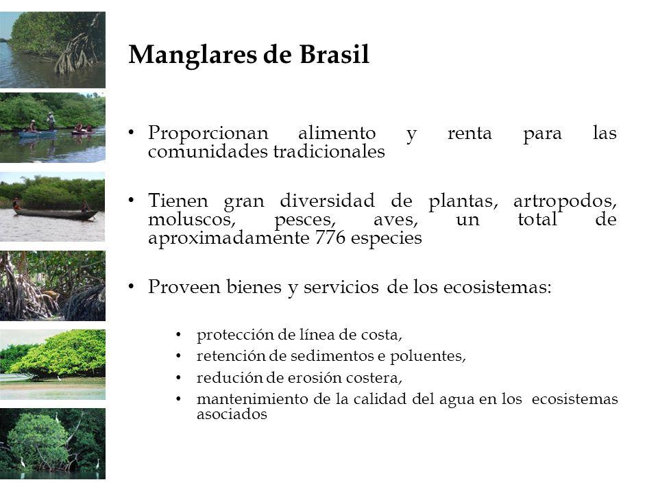 Proporcionan alimento y renta para las comunidades tradicionales Tienen gran diversidad de plantas, artropodos, moluscos, pesces, aves, un total de ap
