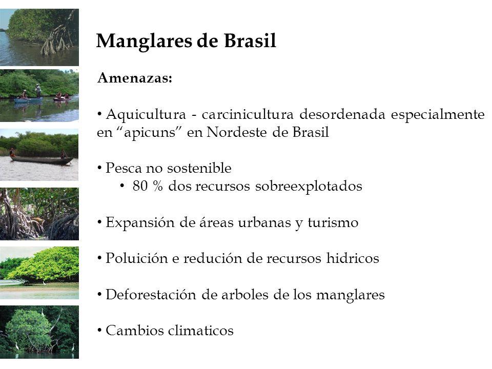 Amenazas: Aquicultura - carcinicultura desordenada especialmente en apicuns en Nordeste de Brasil Pesca no sostenible 80 % dos recursos sobreexplotado