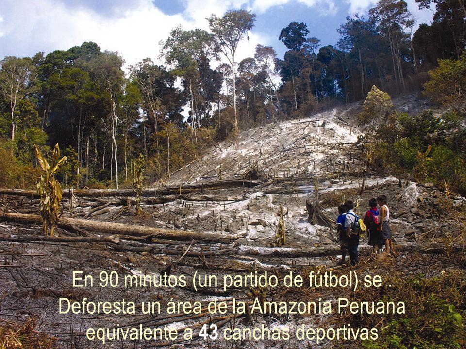 En 90 minutos (un partido de fútbol) se. Deforesta un área de la Amazonía Peruana equivalente a 43 canchas deportivas