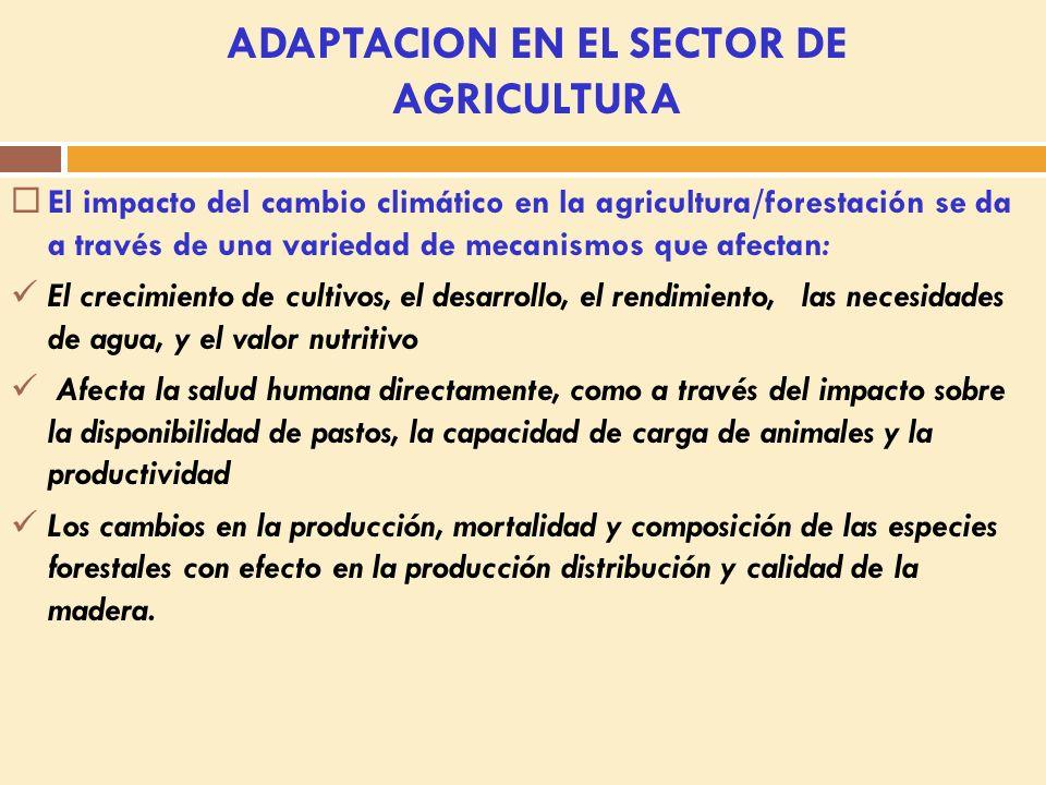 Describir medidas de mitigación clave y de adaptación para el Sector Agricultura.