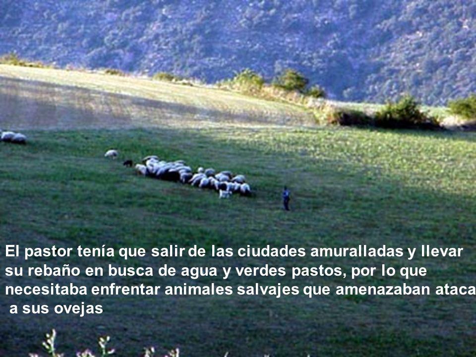 La vida del pastor era de diligencia, pues de.. Todos los animales, la oveja es la mas tímida e indefensa.