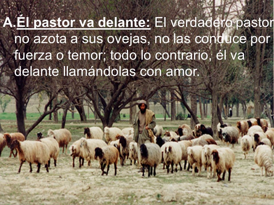 La relación de Jesús con su pueblo es comparada a la de un pastor ¿ Por que?