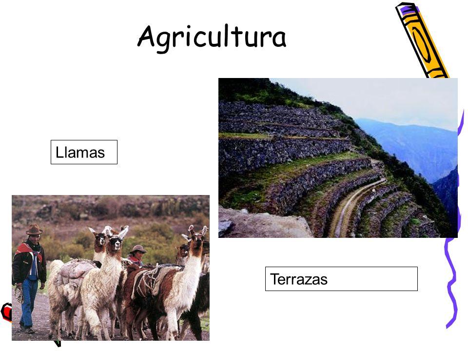 Agricultura Llamas Terrazas