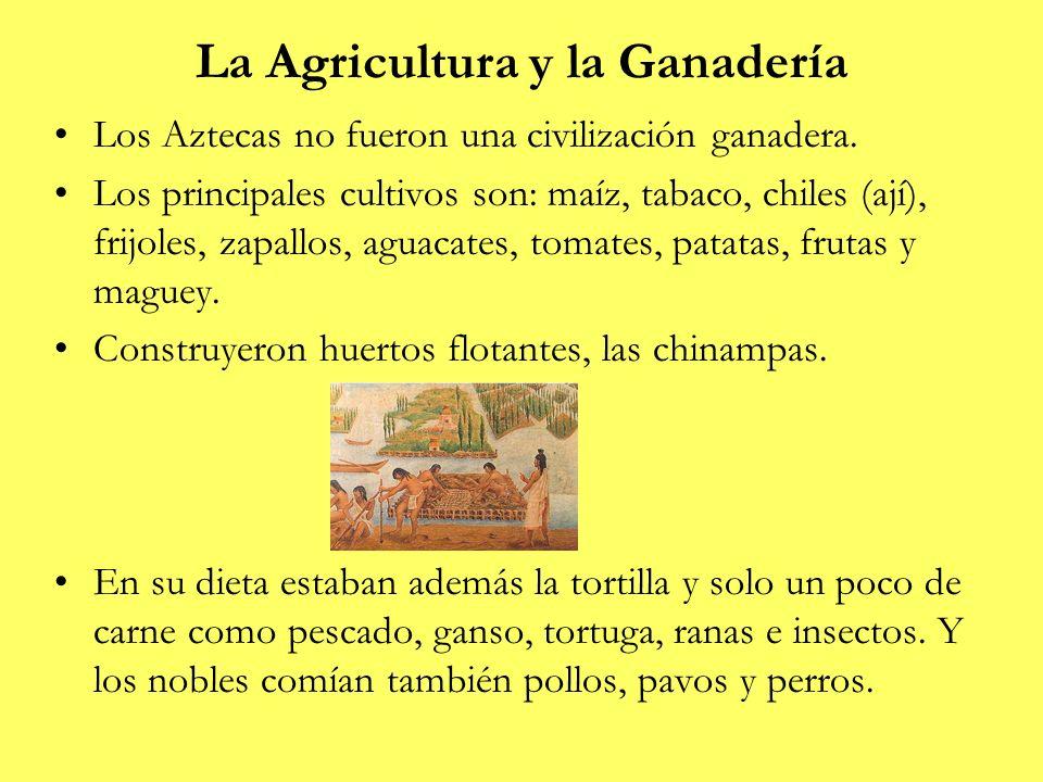 La Agricultura y la Ganadería Los Aztecas no fueron una civilización ganadera. Los principales cultivos son: maíz, tabaco, chiles (ají), frijoles, zap