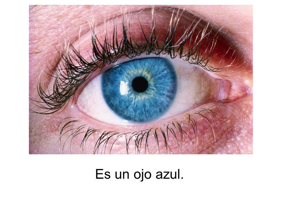Es un ojo azul.
