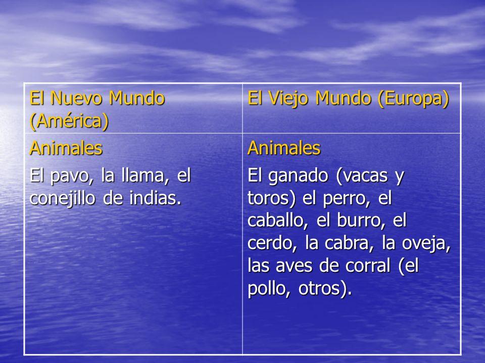 El Nuevo Mundo (América) El Viejo Mundo (Europa) Animales El pavo, la llama, el conejillo de indias. Animales El ganado (vacas y toros) el perro, el c