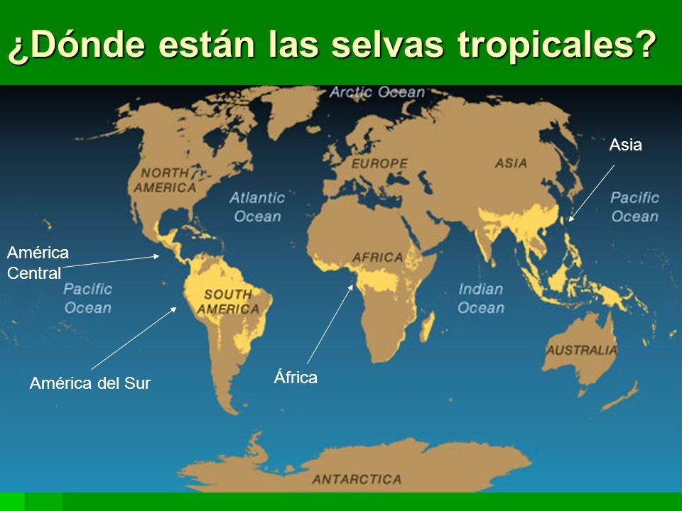¿Dónde están las selvas tropicales? América Central América del Sur África Asia