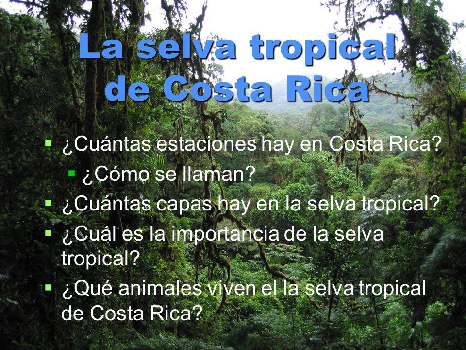 La selva tropical de Costa Rica ¿Cuántas estaciones hay en Costa Rica? ¿Cómo se llaman? ¿Cuántas capas hay en la selva tropical? ¿Cuál es la importanc
