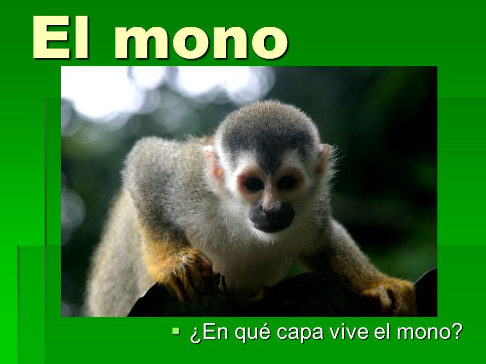 El mono ¿En qué capa vive el mono? ¿En qué capa vive el mono?