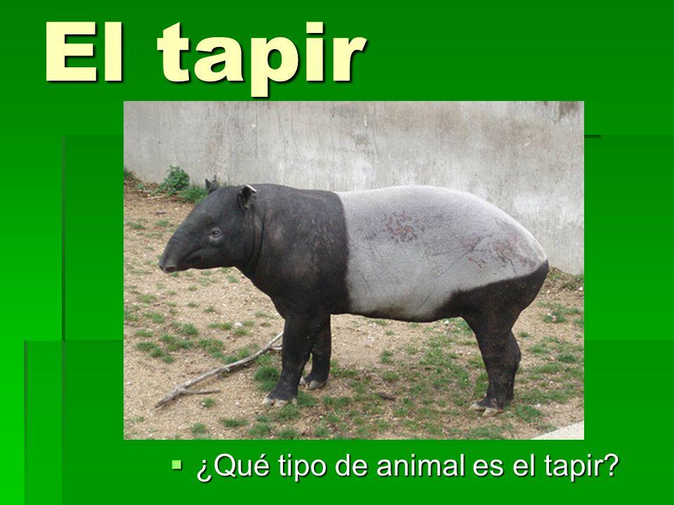 El tapir ¿Qué tipo de animal es el tapir? ¿Qué tipo de animal es el tapir?
