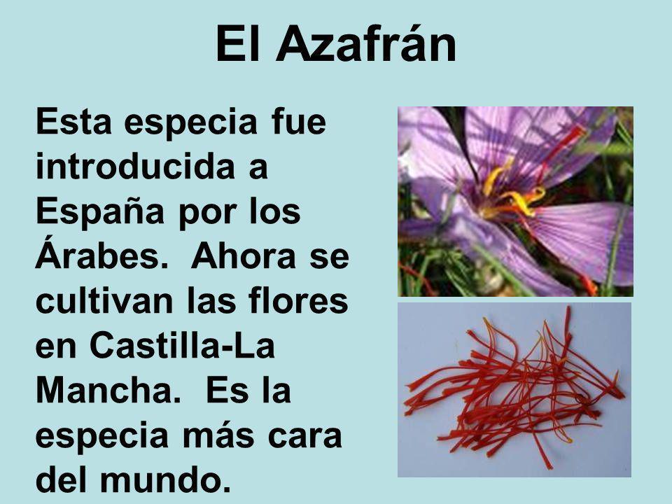 El Azafrán Esta especia fue introducida a España por los Árabes. Ahora se cultivan las flores en Castilla-La Mancha. Es la especia más cara del mundo.