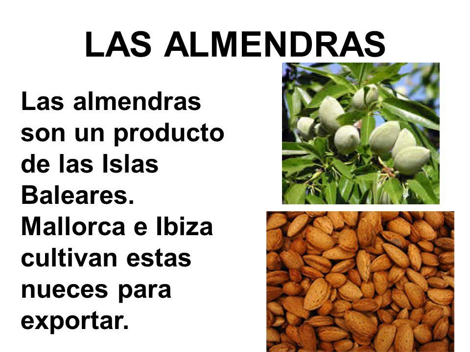 LAS ALMENDRAS Las almendras son un producto de las Islas Baleares. Mallorca e Ibiza cultivan estas nueces para exportar.