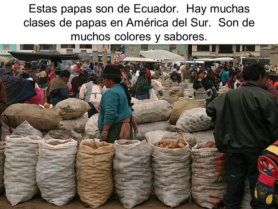 Estas papas son de Ecuador. Hay muchas clases de papas en América del Sur. Son de muchos colores y sabores.