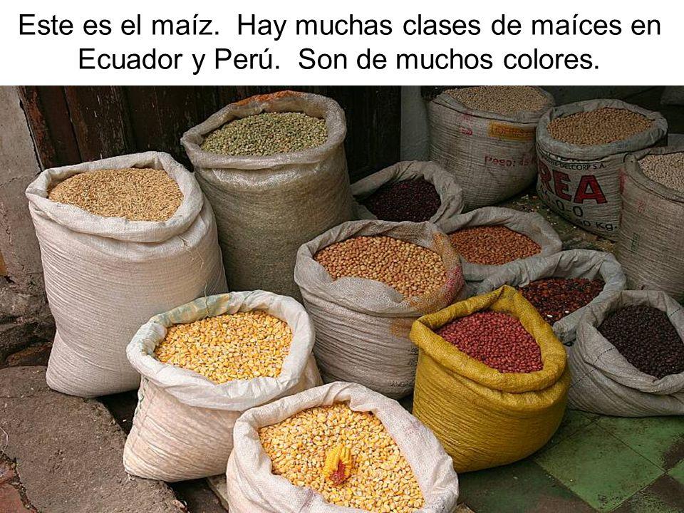 Este es el maíz. Hay muchas clases de maíces en Ecuador y Perú. Son de muchos colores.