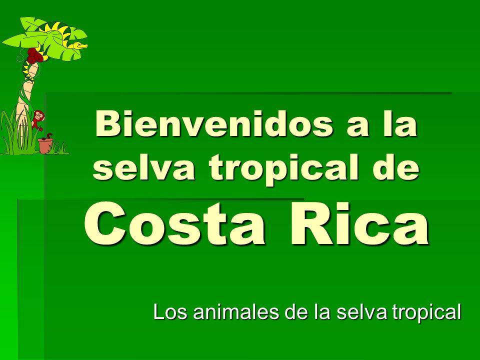 Bienvenidos a la selva tropical de Costa Rica Los animales de la selva tropical