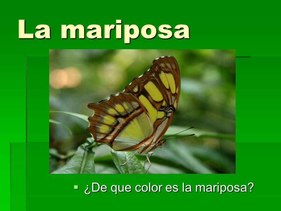 La mariposa ¿De que color es la mariposa? ¿De que color es la mariposa?