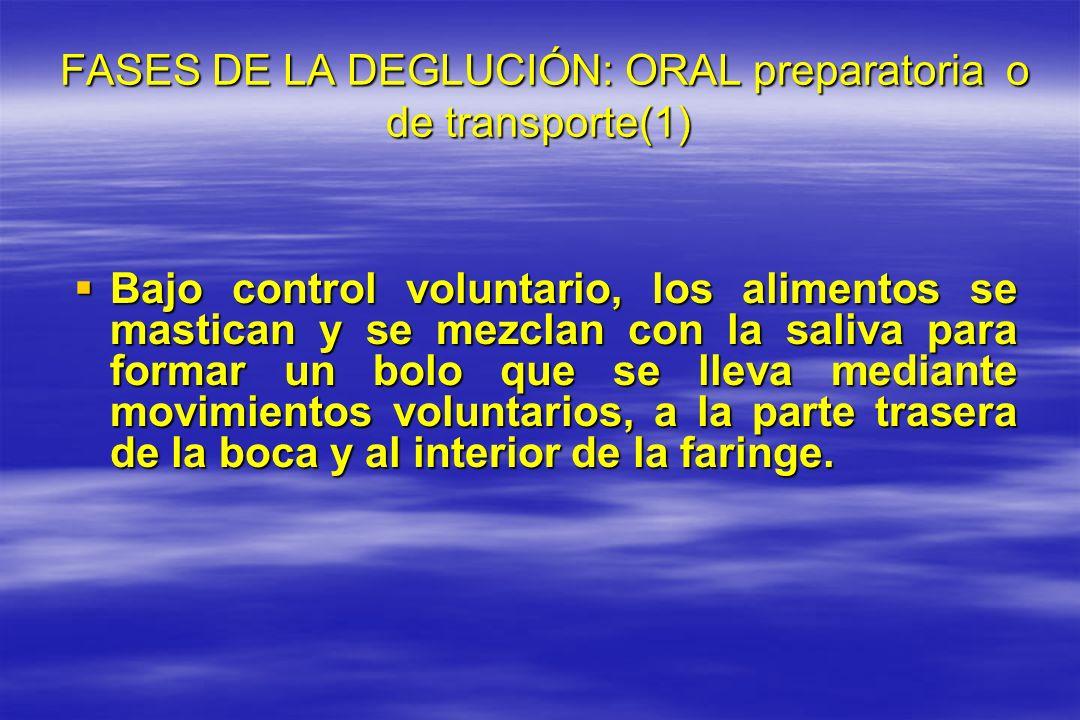 FASES DE LA DEGLUCIÓN: ORAL preparatoria o de transporte(1) FASES DE LA DEGLUCIÓN: ORAL preparatoria o de transporte(1) Bajo control voluntario, los a