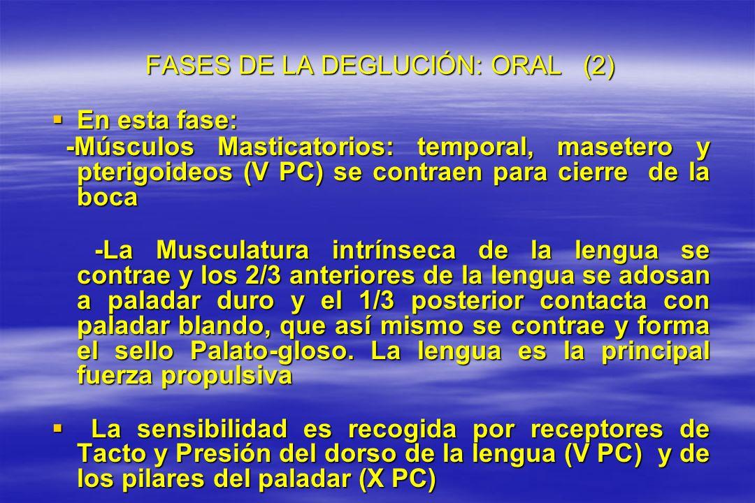 FASES DE LA DEGLUCIÓN: ORAL (2) FASES DE LA DEGLUCIÓN: ORAL (2) En esta fase: En esta fase: -Músculos Masticatorios: temporal, masetero y pterigoideos
