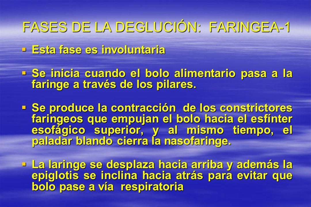 FASES DE LA DEGLUCIÓN: FARINGEA-1 FASES DE LA DEGLUCIÓN: FARINGEA-1 Esta fase es involuntaria Esta fase es involuntaria Se inicia cuando el bolo alime