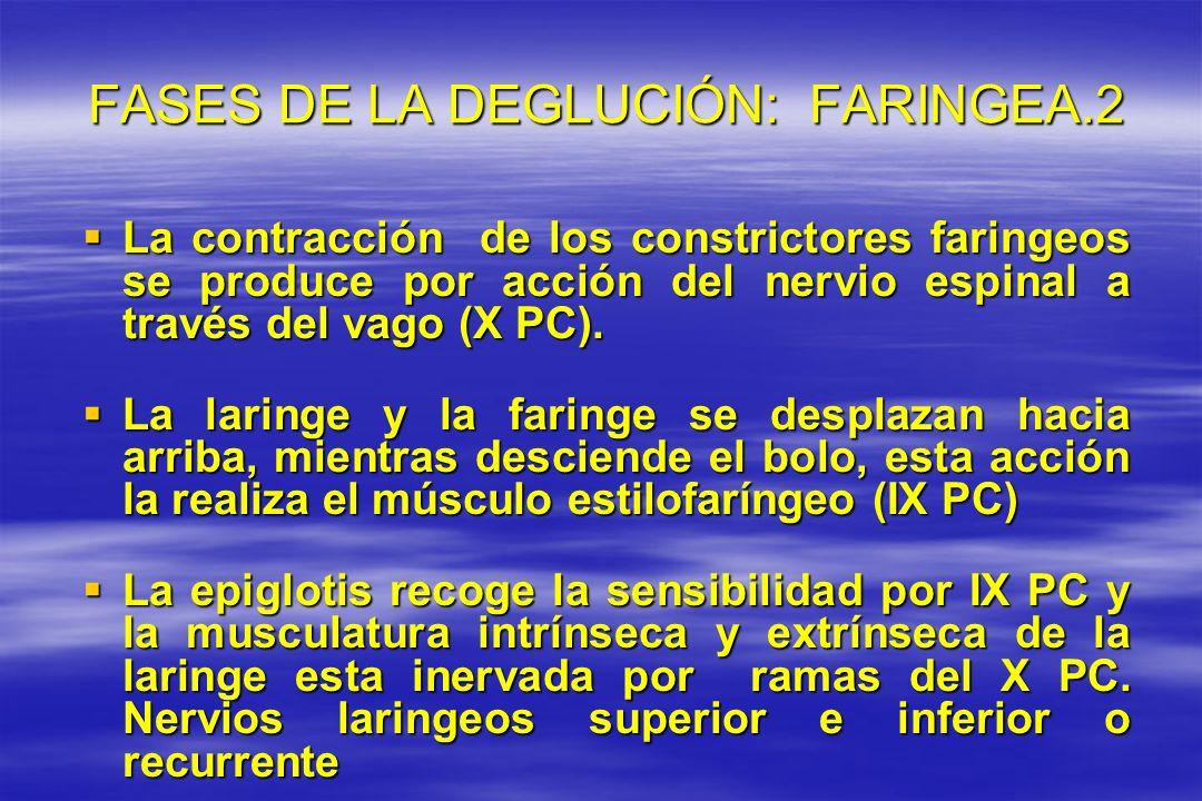 FASES DE LA DEGLUCIÓN: FARINGEA.2 FASES DE LA DEGLUCIÓN: FARINGEA.2 La contracción de los constrictores faringeos se produce por acción del nervio esp