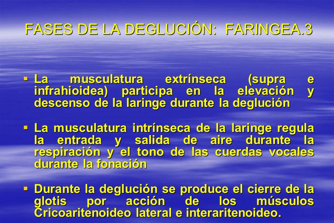 FASES DE LA DEGLUCIÓN: FARINGEA.3 FASES DE LA DEGLUCIÓN: FARINGEA.3 La musculatura extrínseca (supra e infrahioidea) participa en la elevación y desce