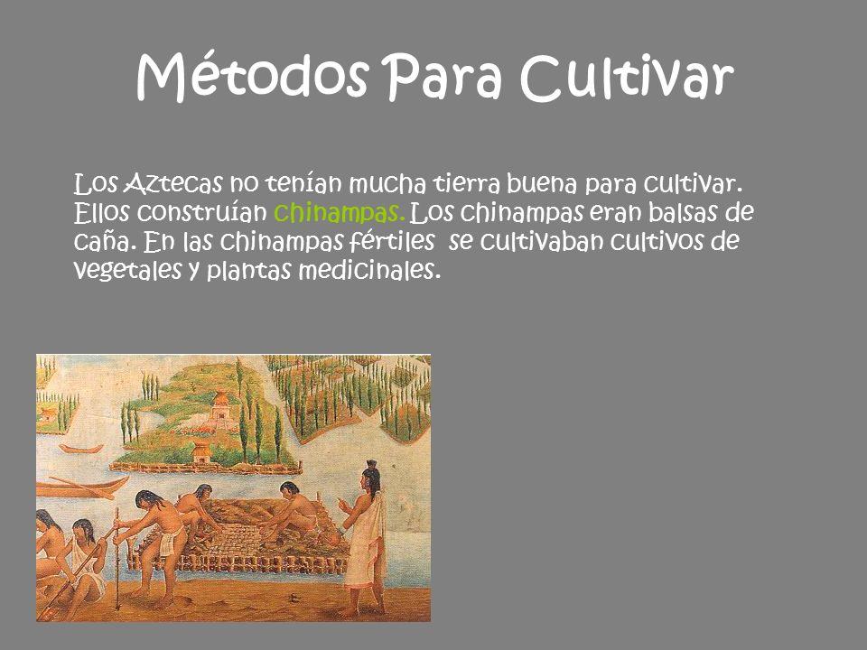 Los mayas vivían en América Central y México.¡No hubo un conquistador de los Mayas.