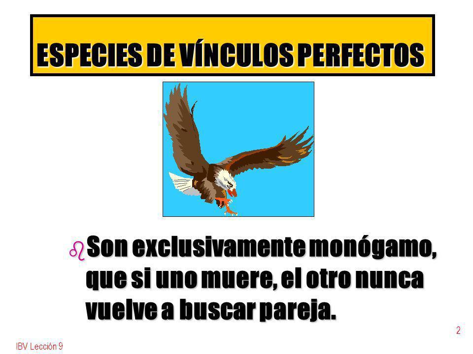 IBV Lección 9 2 ESPECIES DE VÍNCULOS PERFECTOS b Son exclusivamente monógamo, que si uno muere, el otro nunca vuelve a buscar pareja.