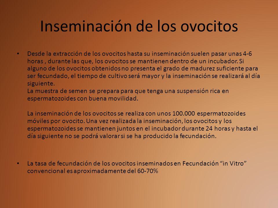 Inseminación de los ovocitos Desde la extracción de los ovocitos hasta su inseminación suelen pasar unas 4-6 horas, durante las que, los ovocitos se m