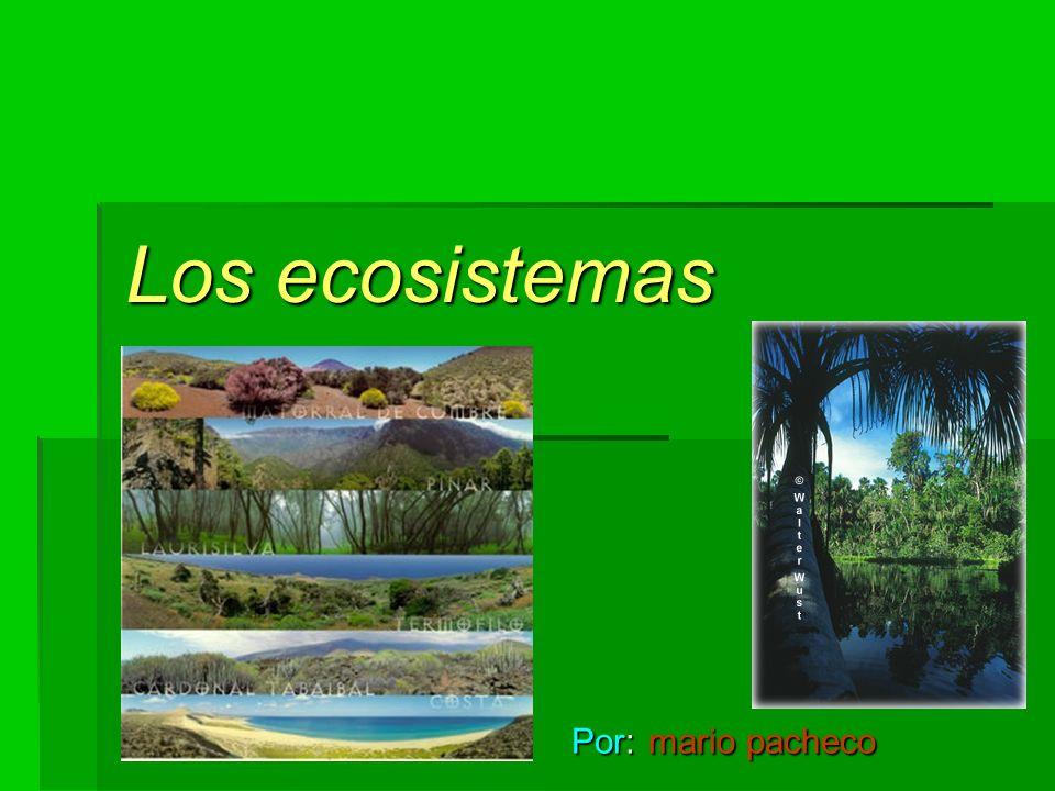 Los ecosistemas Por: mario pacheco