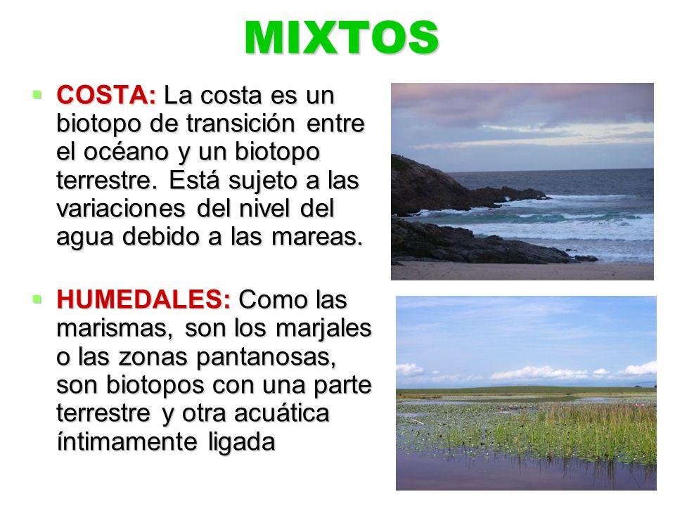 MIXTOS COSTA: La costa es un biotopo de transición entre el océano y un biotopo terrestre. Está sujeto a las variaciones del nivel del agua debido a l
