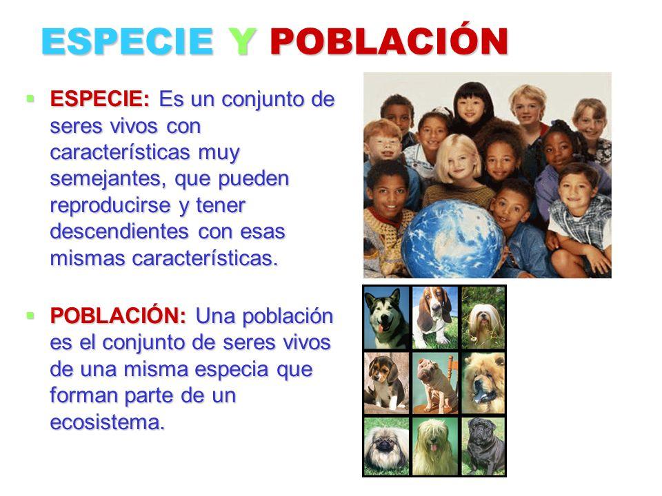 ESPECIE Y POBLACIÓN ESPECIE: Es un conjunto de seres vivos con características muy semejantes, que pueden reproducirse y tener descendientes con esas